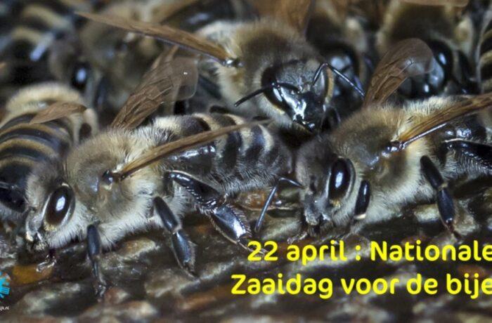 Help de bijen: 22 april Nationale Zaaidag