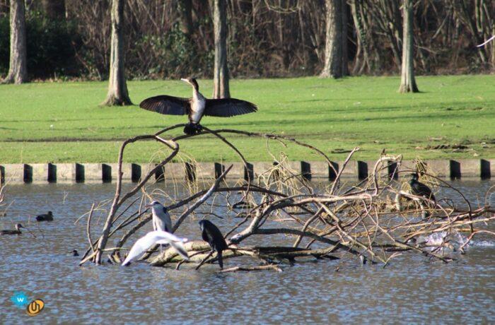 Drama voor watervogels Warandepark