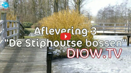 DIOW Natuur #03 (Stiphoutse bossen)