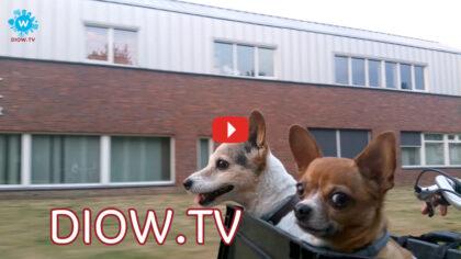 Zomervakantie thuis in Helmond wordt steeds aantrekkelijker