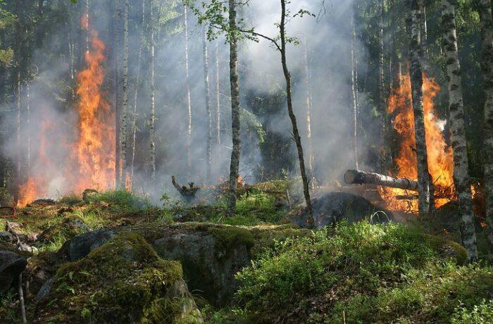 Bosbrand op Rijpelberg in Helmond