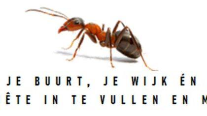 Enquête BC De Rijpel / Ankieta BC De Rijpel