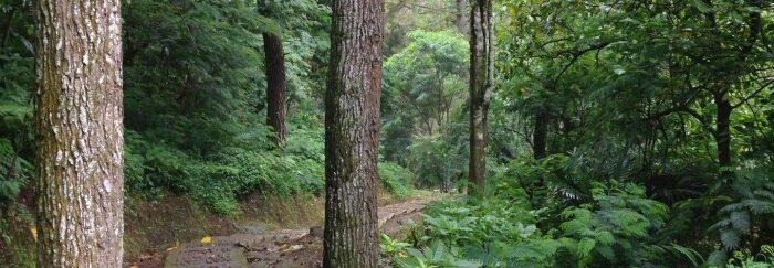 Helmond presenteert meerjarenplan 571 hectare bos