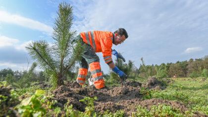 Achtduizend nieuwe bomen geplant bij recreatieplas Berkendonk