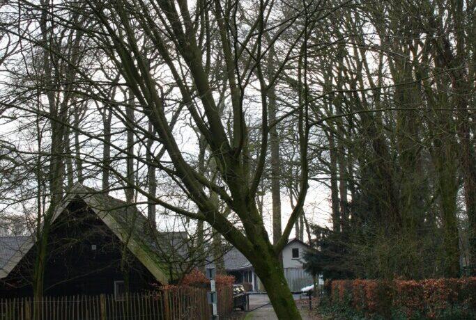 SP Helmond vraagt aandacht voor waardevolle bomen