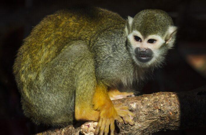 Lezing Henk van Schayk over reis natuurparken in Costa Rica