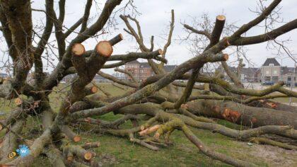 Helmond probeert bomen in Brandenvoort te behouden