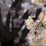 Mooi stukje Helmond in de lente