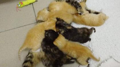 Kittens binnenkort weer beschikbaar