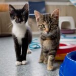 gastgezinnen voor kittens
