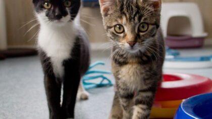 Gastgezinnen gezocht om kittens op te vangen