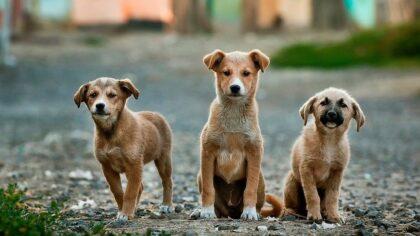 Jaarlijkse controles voor de hondenbelasting in Helmond