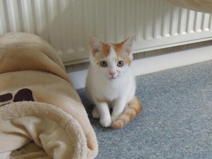 Dier van de week kittens