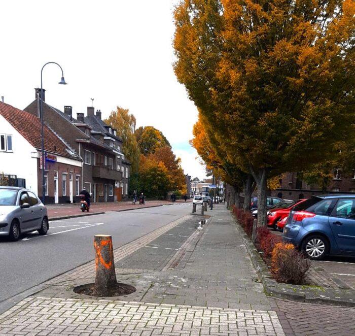 Bomen gekapt aan de Molenstraat