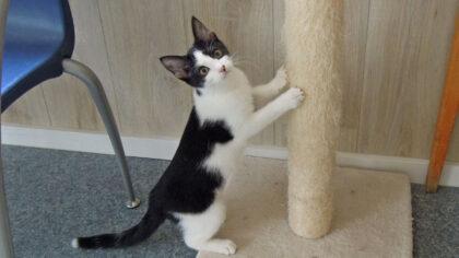 Dieren van de week: kittens
