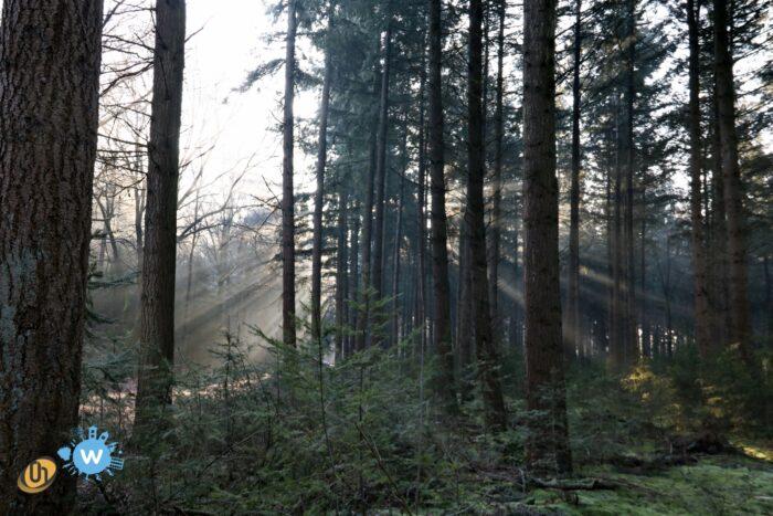 Werken aan een gezond bos in de Stiphoutse bossen