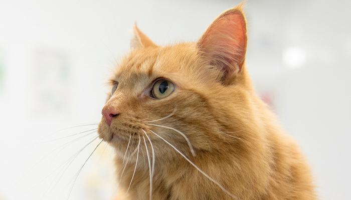 Uw kat castreren tegen gereduceerd tarief