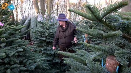 Kerstbomenbos Schuurmans
