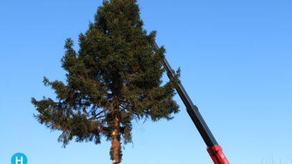 Kerstboom OVMH grootste van Helmond?