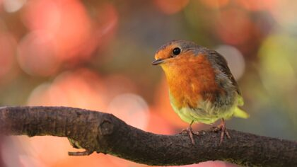 Nationale Tuinvogeltelling weer van start