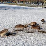 Het Hortensiapark ligt nog in een dik pak sneeuw.