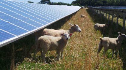 Vragen CDA vanwege onrust rond zonnepark Stiphout