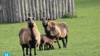Dierenverblijven Warandepark krijgen kwaliteitsimpuls