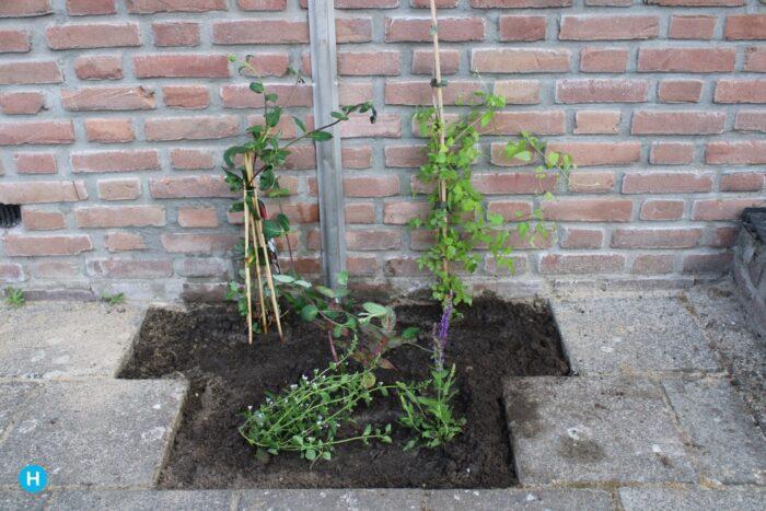 Project Steenbreek
