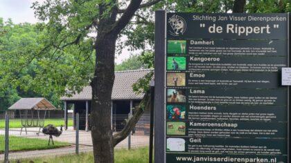 Opnieuw een lama dood in dierenpark de Rippert in Rijpelberg
