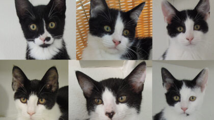 Dier van de week zwart/witte kittens