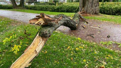 Harde wind rukt veel takken van de bomen