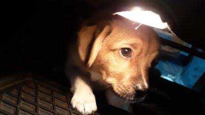 Politie ontfermt zich over puppy na brandmelding